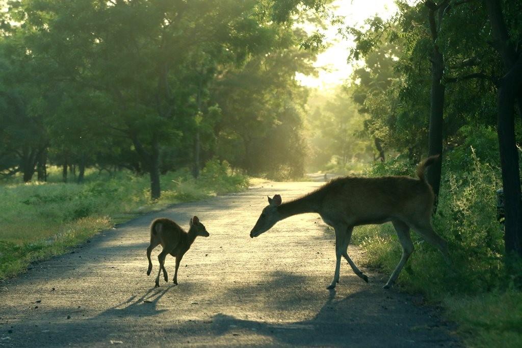 Taman Nasional dan Kawasan Ekowisata Dibuka Bertahap
