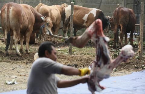 Jelang IdulAdha, Penjual Hewan Ternak Diminta Berjualan Secara Daring